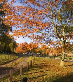 Autumn at Bearsted Green