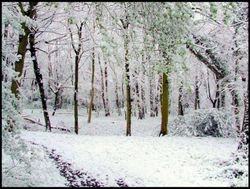 Snowy woodland path Wallpaper