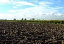 A ploughed field at Ellerker