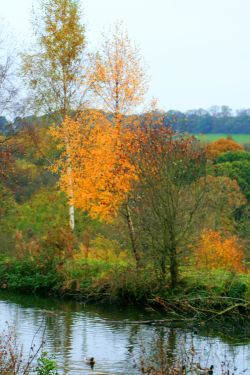 Autumn colours in the wetlands centre.