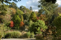 Autumn at Hillier Gardens in Hampshire