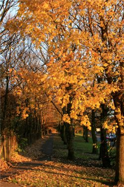Autumn leaves on a Birtley footpath, Gateshead.