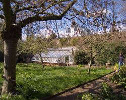 The Orchard at Fenton House, Hampstead