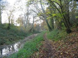 The Basingstoke Canal - towpath