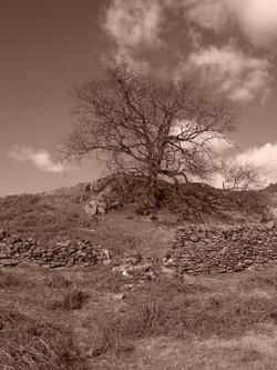Tree, Loughrigg Ambleside