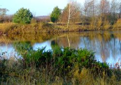 One of the wetlands many ponds