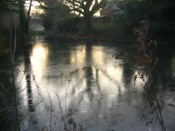 Basingstoke Canal - very cold morning walk