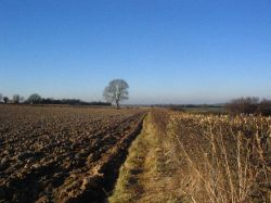 Ploughed field and cut hedgerow
