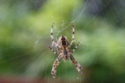 Spider in it's web - Close up