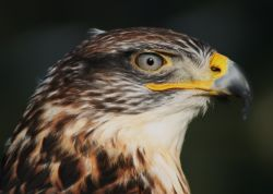 Devon Bird of Prey Centre