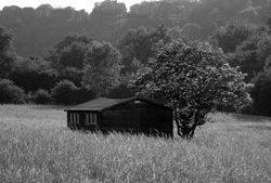 Shed in a field at Luddesdown