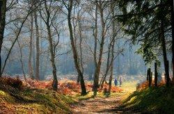 A Winter Walk