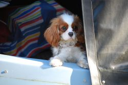 Charlie of the Canal boat