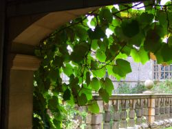 Sitting in the arbour, Haddon Hall