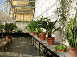 Oxford Botanical Gardens 95