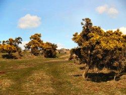 Springtime on the Moor