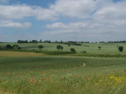 Looking across the meadow to the Essex countryside