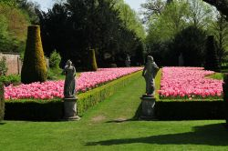 Tulips in Long Garden, Cliveden
