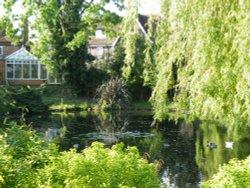The duck pond, Ruislip