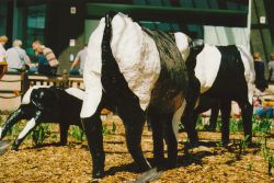 Concrete Cows in Midsummer Place
