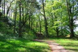 Marles Wood
