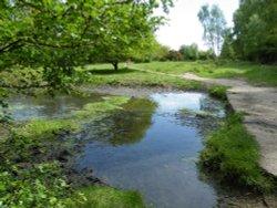 Ruislip Common