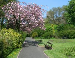 Clitheroe Grounds