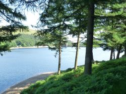 Looking through the trees at Derwent Reservoir.