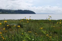 The coast at Laugharne