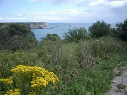 Berry Head, St.Mary's Bay, Brixham