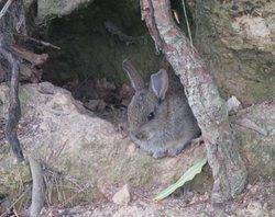 A Rabbit in Leonardslee Gardens