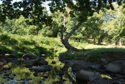 River Lin