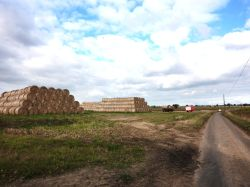 Straw Bales in Reedham.