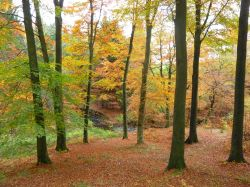 Autumn through Mill Wood