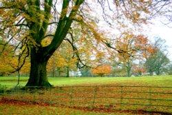 Parkland at Nidd.