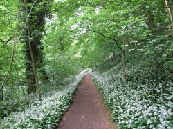 Garlic Path, Ilam Park