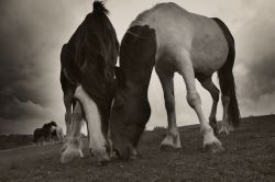 Shires in the storm