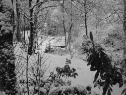 Taylor Park snow