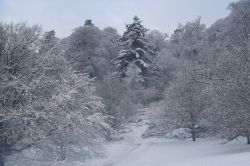 A snowy view over Killerton