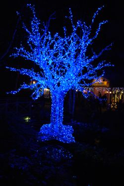 Blue tree day
