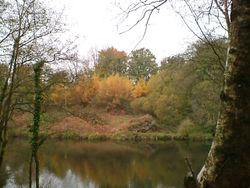 Otterhead Gold: Larches and Bracken across the Royston Lake