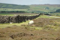 On the Moors 2