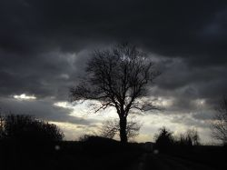 Taken near Tetbury November 2008
