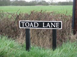 Did not see any Toads
