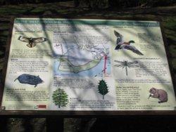 Info Board at Fritton lake