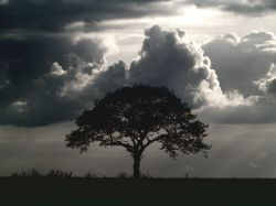 Silhouetted tree, Botolph Claydon, Bucks