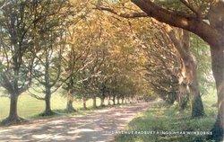 The Avenue, Badbury Rings, Near Wimborne Dorset, Postcard