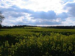 Fields of Rape, Wheatley