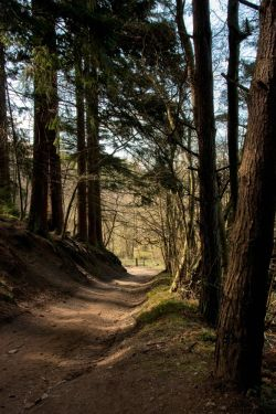 Dalby Forest 1