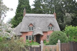 Thatched cottage in Widdington